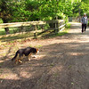 Maddie, dog, stiles, towpath