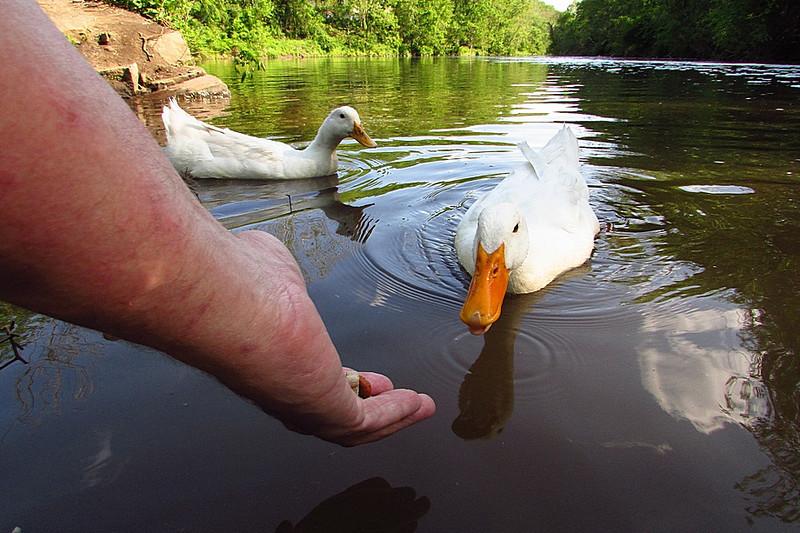 Sonny, duck, treats, hand, canal, 9, FB