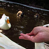 Sonny, duck, treats, hand, canal, 8, FB