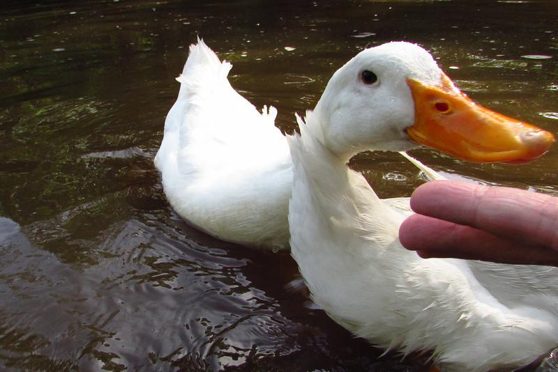 Sonny, duck, treats, hand, canal, 7