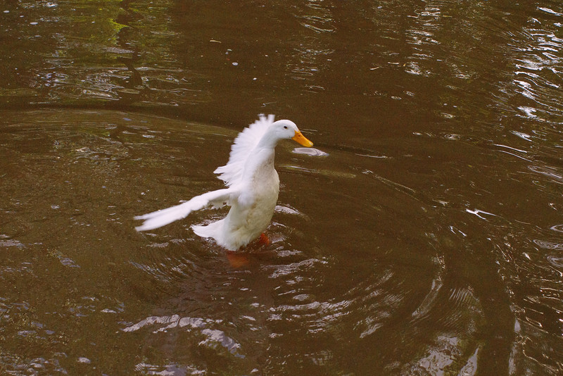 Sonny, look up, canal, duck, 3
