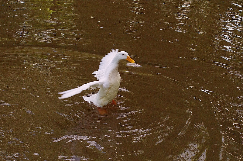 Sonny, look up, canal, duck, 3, FB