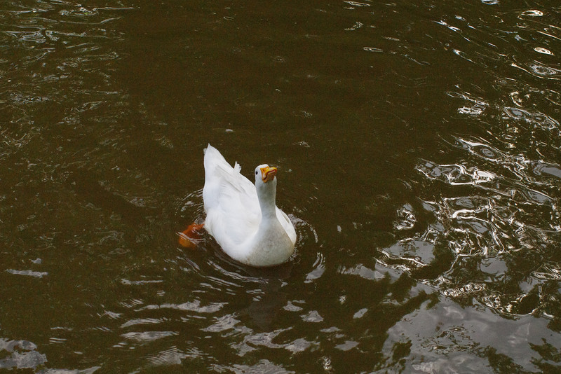 Sonny, look up, canal, duck, 55
