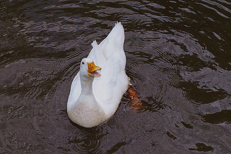 Sonny, look up, canal, duck, 8, FB