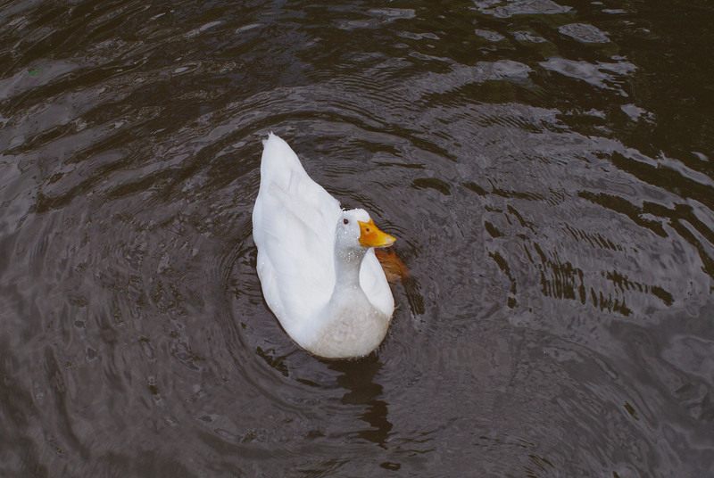 Sonny, look up, canal, duck, 9