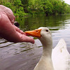 sonny, hand, me, canal, duck, 3, FB