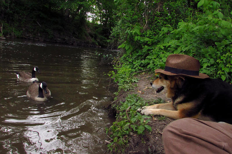maddie, hat, canal, towpath, 33