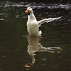 sonny, wings, canal, fix, 2