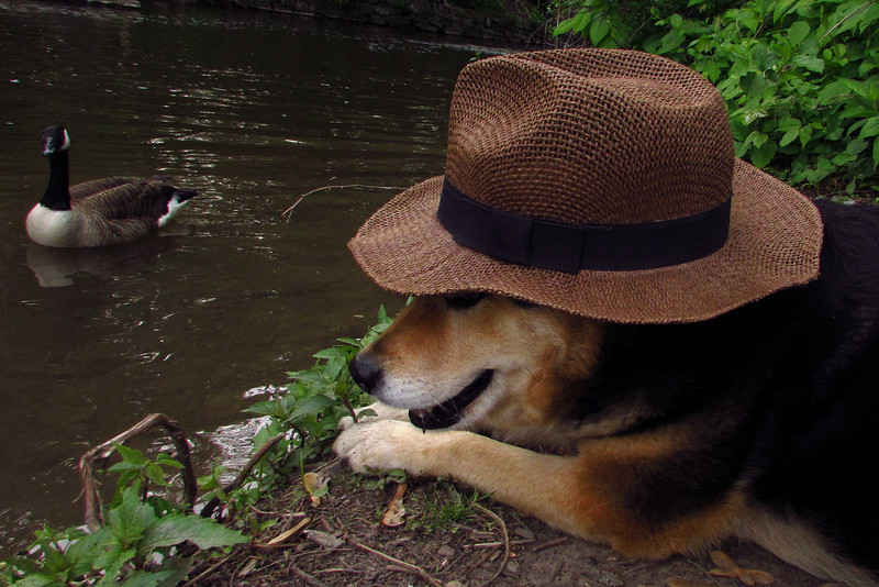 Maddie, hat, canal, towpath