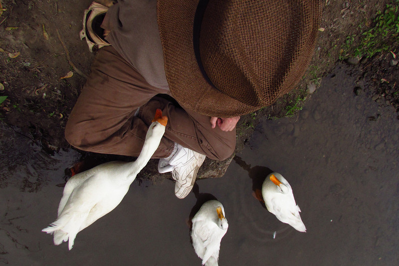 Me, group, duck, ducks, goose, canal, overhead