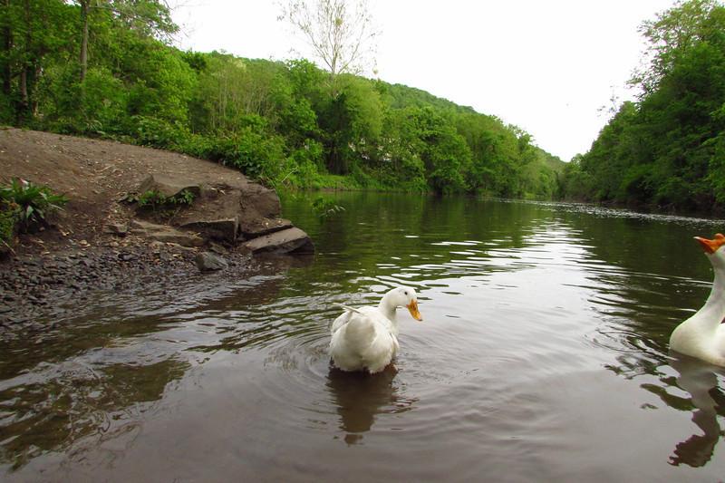 cher, tush, tushy, canal, duck, original