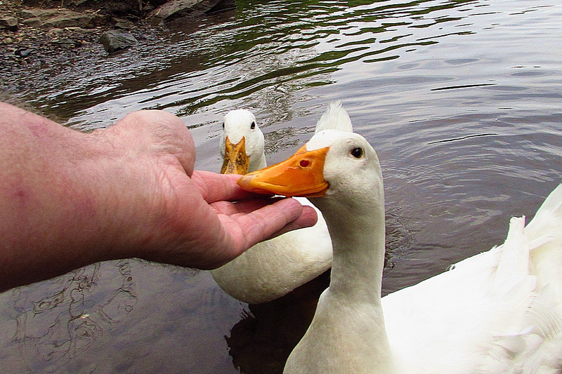 sonny, hand, me, canal, duck, FB