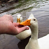 sonny, hand, me, canal, duck