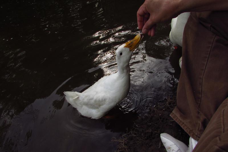Cher, hand, treats, duck, canal