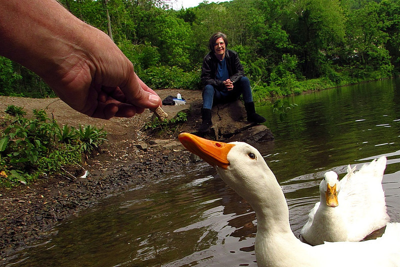 Sonny, Kathi, hand, treat, duck, canal  FB