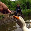 Sonny, Kathi, hand, treat, duck, canal  FB
