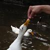 cher, hand, duck, canal, treats, 5