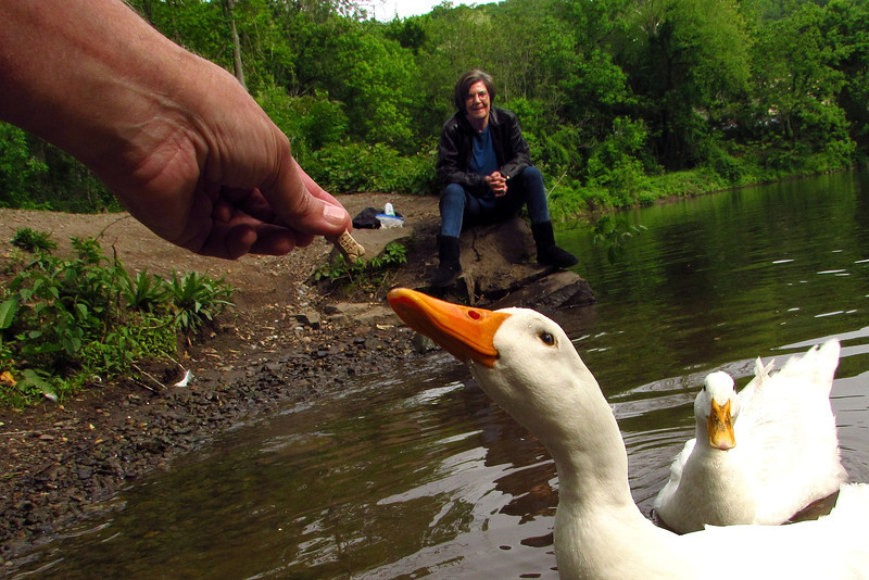 Sonny, Kathi, hand, treat, duck, canal