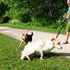 Maddie, dog, towpath