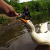 Kathi, Sonny, hand, treats, canal, duck, original