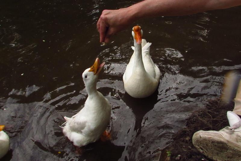 Cher, hand, treats, duck, canal, 3