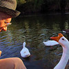 Me, marty, big guy, goose, portrait, canal, FB2