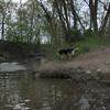 Maddie, Blue Heron, canal, 1