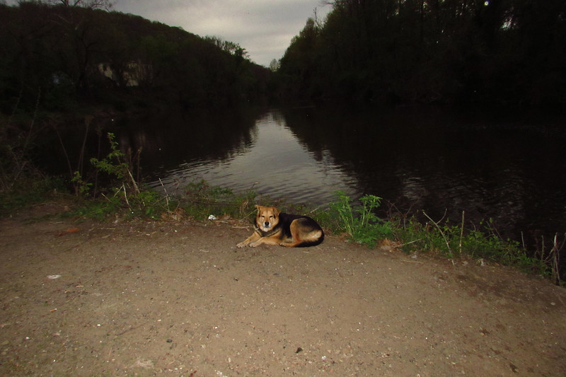Maddie, portrait, sunset, canal, towpath