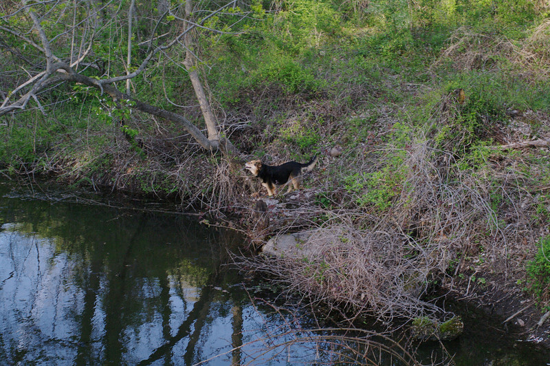 Maddie, towpath, canal