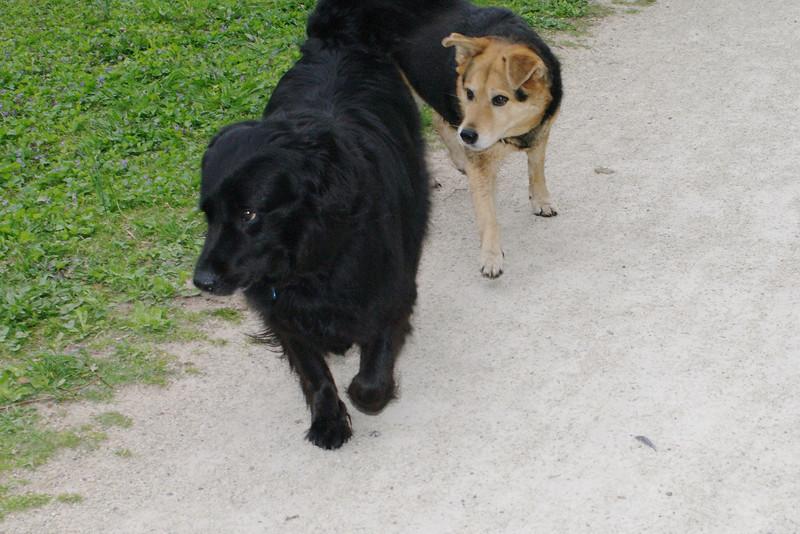 Maddie, dog, towpath, black, 3