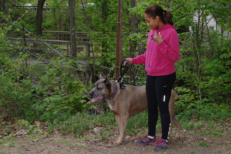 Cane corso, dog, towpath, 4