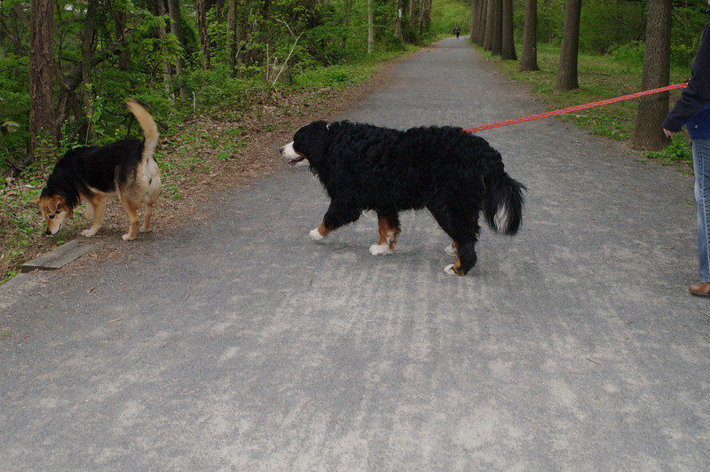Maddie, dog, towpath, whiskey