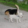 Maddie, dog, towpath, 4