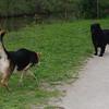Maddie, dog, towpath, black