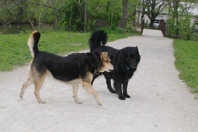 Maddie, dog, towpath, black, 5