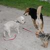 Maddie, dog, towpath, kirk, 5