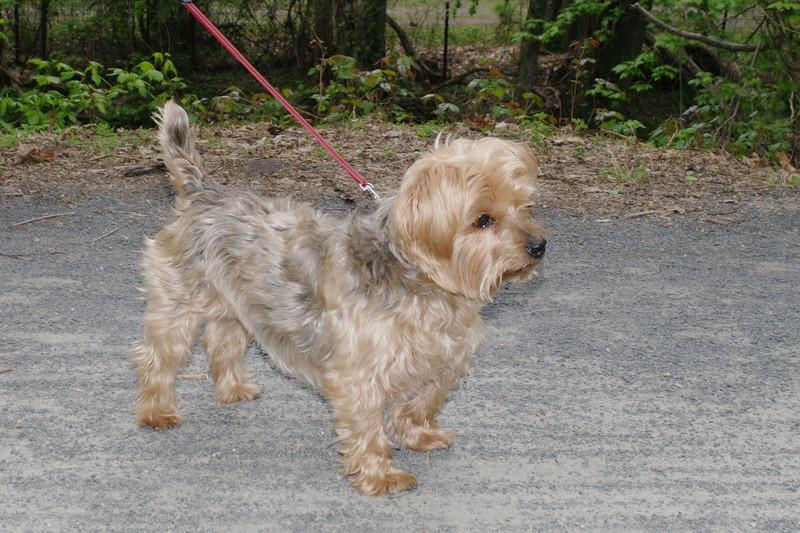 Maddie, dog, towpath, kirk