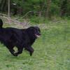 dog, towpath, black