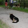 Maddie, dog, towpath, down