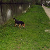 Maddie, towpath, woods, canal, towparh, 2