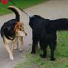Maddie, quinn, dog, towpath