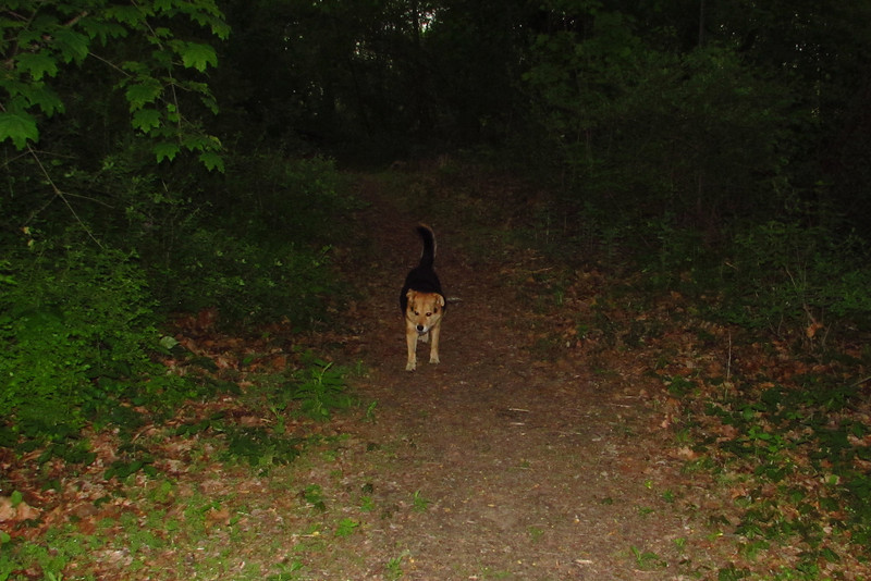 Maddie, towpath, woods
