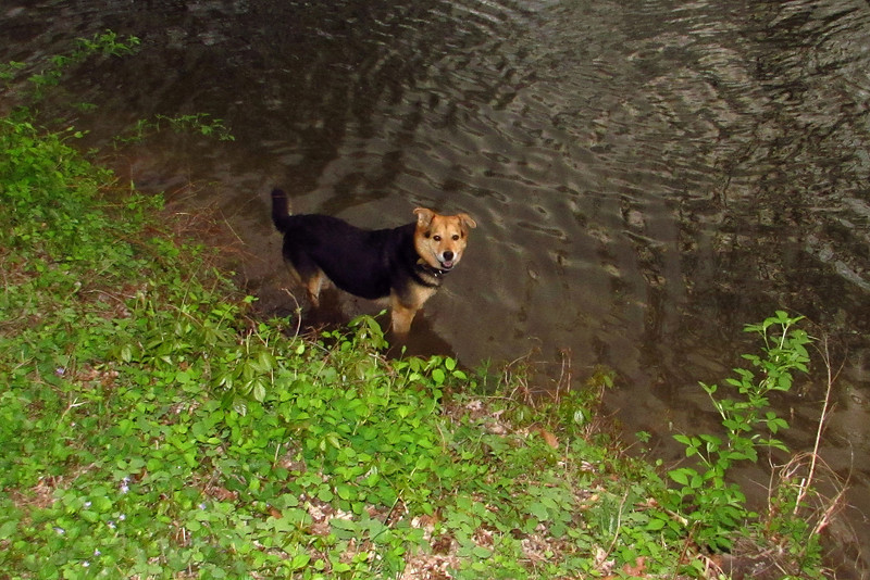 Maddie, towpath, woods, canal, towparh, 3