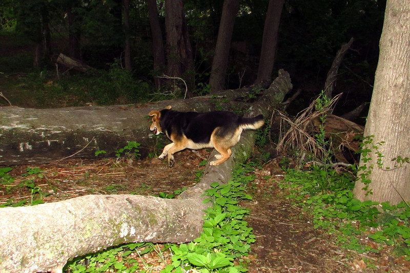 Maddie, towpath, woods, 3
