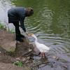 kathi, big guy, goose, canal, 2, after gosling