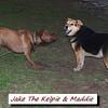 Jake, kelpie, Maddie, towpath, FB