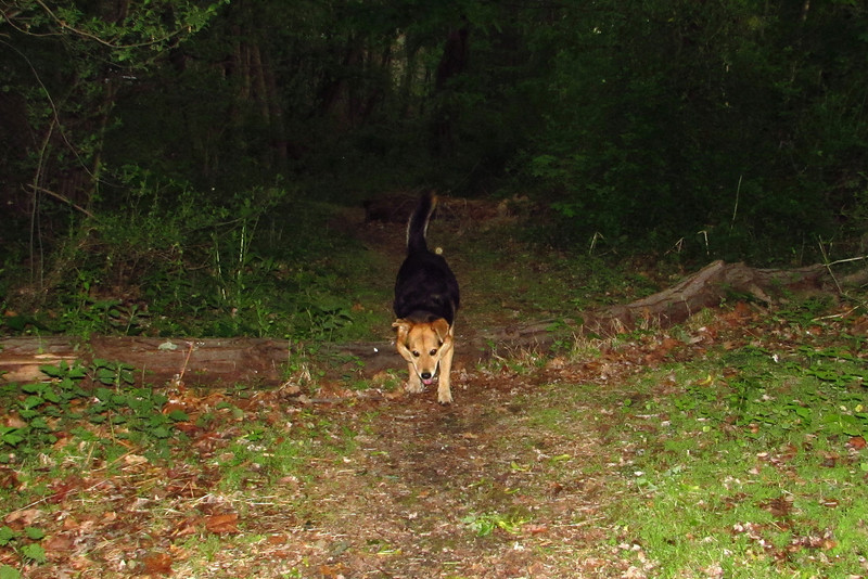 Maddie, towpath, woods, 2