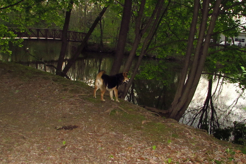 Maddie, towpath, woods, 6