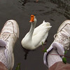 Big Guy, goose, canal, sneakers