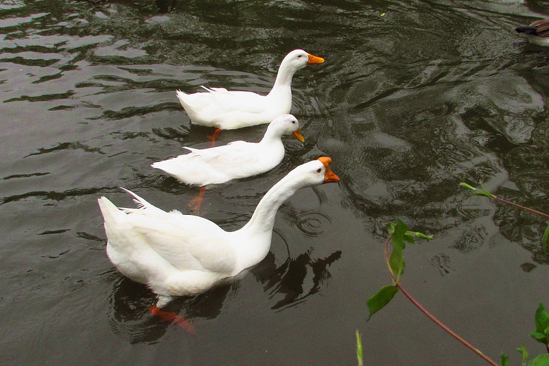 Big, cher, sonny, duck, goose, canal